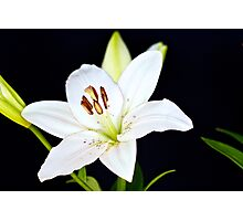 White Lily IV Photographic Print