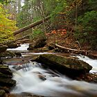 Autumn in Ganoga Glen by Tim Devine