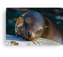 Sleeping Sea Lion Canvas Print