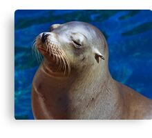 Peaceful Sea Lion Canvas Print