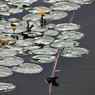 Relaxing on the Delta Danube by Derek McMorrine