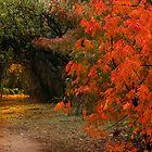 The Secret Path by Sue  Cullumber