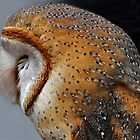 Barn Owl by Yampimon