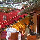 Poinsettias- Noches Buenas - Christmas Stars, Puerto Vallarta, Mexico by PtoVallartaMex