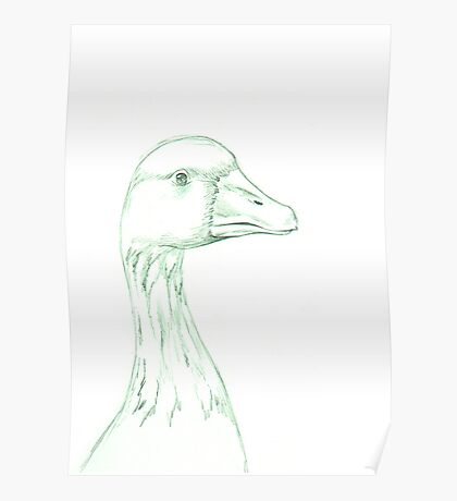 Grey Goose (domestic breed) Poster