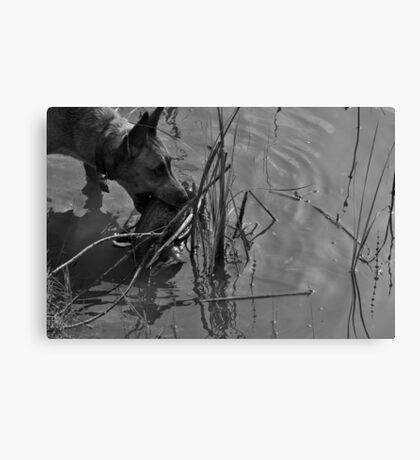 Decoy Rescue Canvas Print