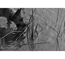 Decoy Rescue Photographic Print