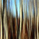 Autumn Lines by Amanda White