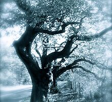 Whispy trees by Johnathan Bellamy