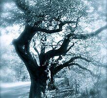 Whispy trees by bertie01