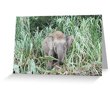 Borneo Elephant Greeting Card