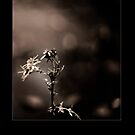 Towards the light 2 by jamesataylor