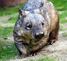 Wombat by CatKV