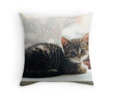 Kitten In The Window Throw Pillow