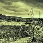 Dartmoor by MickHay