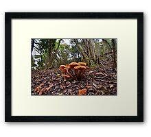 Fungi on the Forest Floor Framed Print