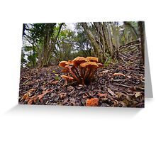 Fungi on the Forest Floor Greeting Card