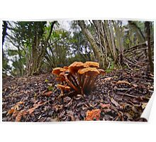 Fungi on the Forest Floor Poster