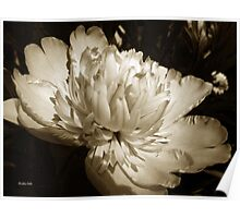 Sepia Peony Flower Art Poster