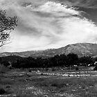 Rincon Panorama by Donovan Olson