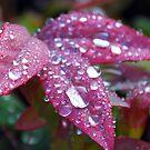 leaf by Lenny La Rue, IPA