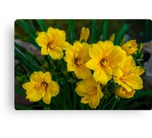 Today`s Delight Canvas Print