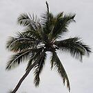 Palm Tree by Soulmaytz