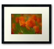 Poppy Art Framed Print
