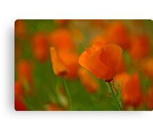 Poppy Art Canvas Print