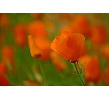 Poppy Art Photographic Print