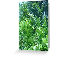 A lemon sticking out Greeting Card