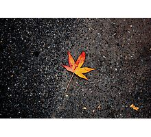 Leaves in Central Park Photographic Print