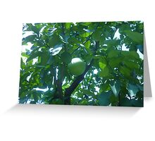Sunlight sparkling off of Fruit Greeting Card