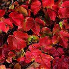 fall has fallen by teresalynwillis
