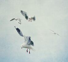 Gulls by Jill Ferry