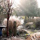 foggy morning by tego53