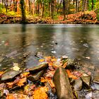 Autumn Creek by Yelena Rozov