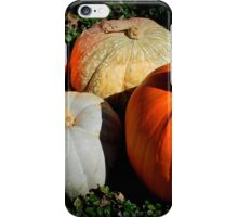 Pumpkins in the Patch iPhone Case/Skin