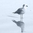 Gull and Reflections, Blue Tint by Corri Gryting Gutzman