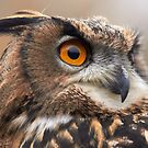 Long Eared Eagle Owl by anniek1947