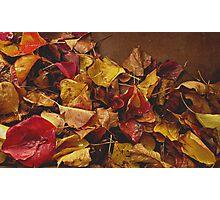Autumn Gone Photographic Print