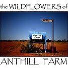 Wildflowers of Anthill Farm by Pene Stevens