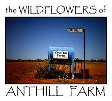 Wildflowers of Anthill Farm by Pene Stevens