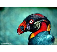 Pope Vulture  Photographic Print