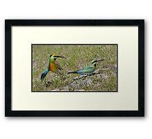 Rainbow Bee-Eater 444 Framed Print