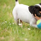 Sammie at Play by Gregory Ballos   gregoryballosphoto.com