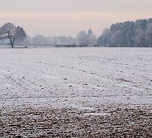 Winter fields by Robert Down