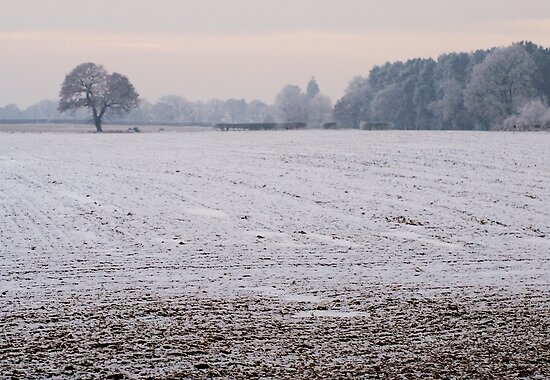 Winter fields by Robert Down