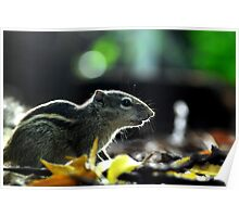 squirrel 01 Poster