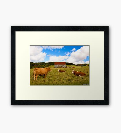 Cows of Mabou Framed Print